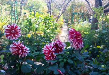 181028_gardenpark2